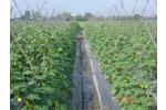 Sử dụng phân bón trong trồng rau an toàn  theo VietGAP
